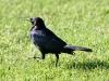 blackbird-brewers-kelowna-cananda-5-13-06