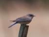 blue-bird-mountain-pinetop-5-25-06